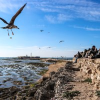 Festival of the...Sea Urchin! - Photo Report on Cadiz's 'Erizada'