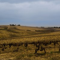 Sunset Sherry: An Afternoon Drive through the Vineyards of Jerez