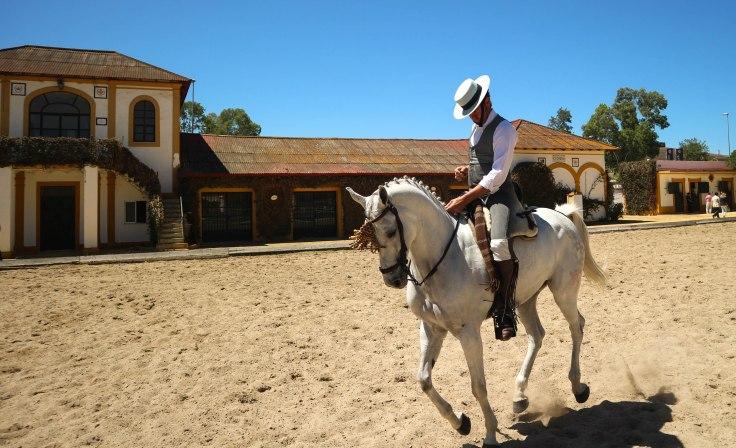 Feria caballo-3