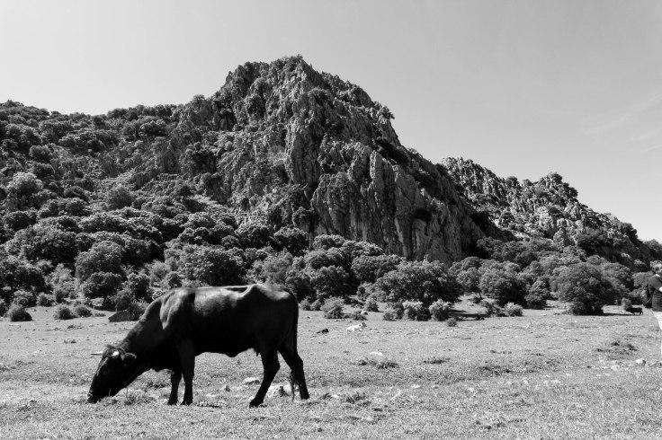 Sierra de Cadiz-19