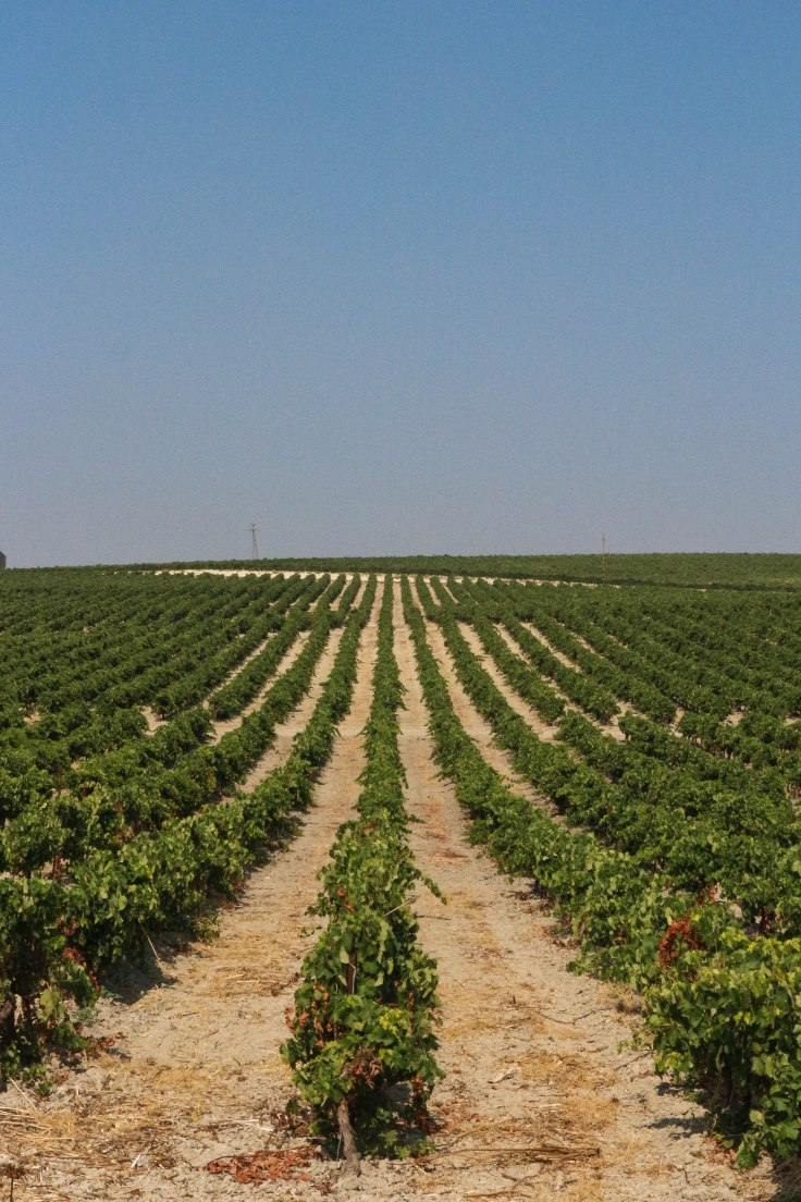Jerez Vineyards-2