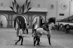 Real Escuela Arte Equestre-10