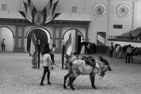 Real Escuela Arte Equestre-11