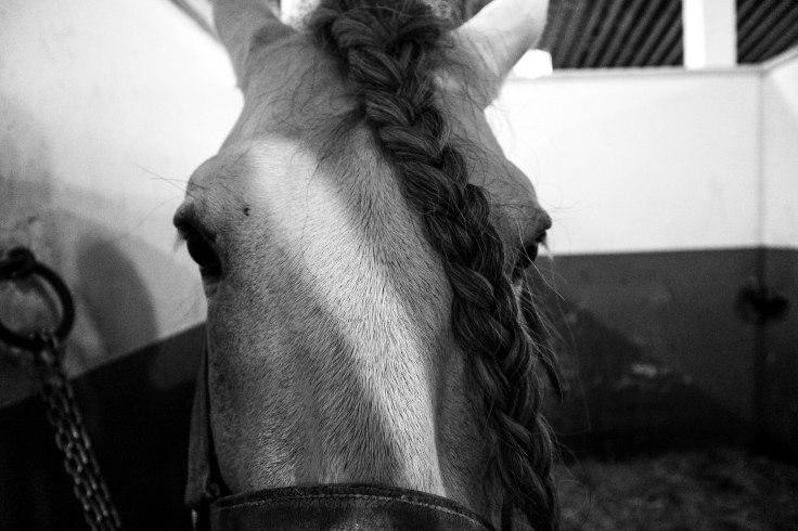 Real Escuela Arte Equestre-2