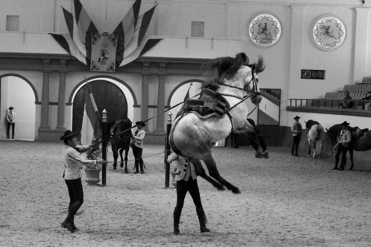 Real Escuela Arte Equestre-8