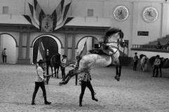 Real Escuela Arte Equestre-9
