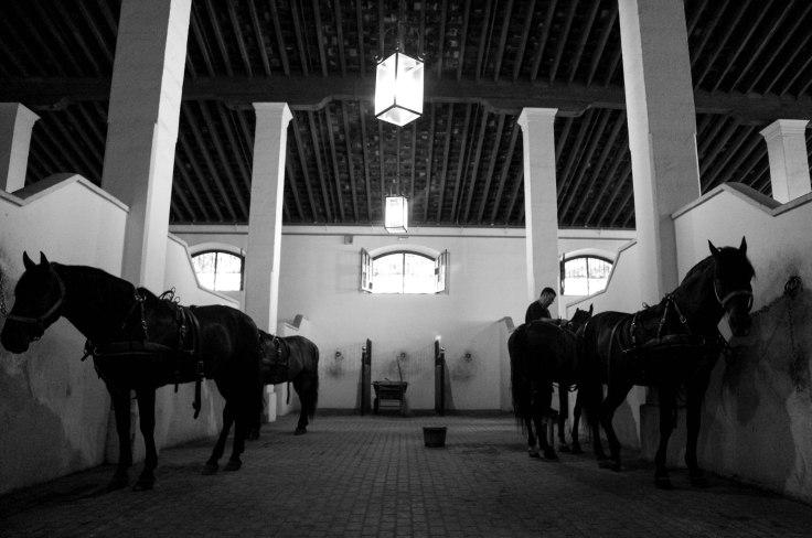 Real Escuela Arte Equestre