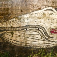 Death of a Whaling Industry: A Chapter in Man's Relation with the Sea